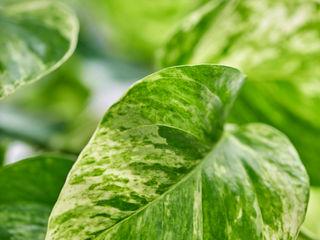 Pflanzenfreude.de Garden Plants & flowers Green