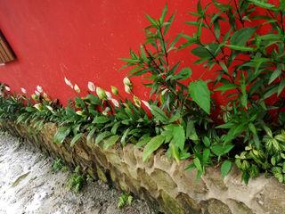 Residência em Paraty Oria Arquitetura & Construções Jardins de fachadas de casas Pedra