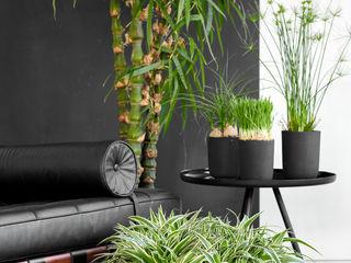 Pflanzenfreude.de Living roomAccessories & decoration Black