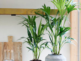 Pflanzenfreude.de Living roomAccessories & decoration Grey