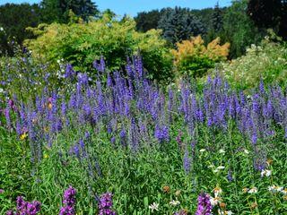 Aster Garden Сад
