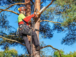 Tree Removal Service: There Are Different Benefits Of Getting One Home Renovation JardínPérgolas, toldos e invernaderos