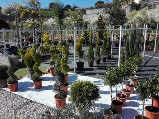 NUOVO VIVAIO con moltissime varietà di fiori e piante EBF di Botti Edoardo Giardino classico