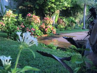Productores de plantas Concepto Verde Minimalist style garden