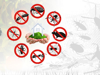 Things You Need To Know About Pest Control Services and Technology Home Renovation Pisos