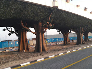 Artificial Plants For Palm Bridge Greening Sunwing Industries Ltd Commercial Spaces Plastic Green