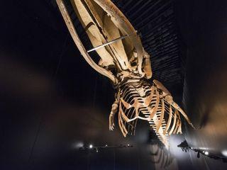 Iluminación de museos. Aquarium Donostia OutSide Tech Light Museos de estilo moderno