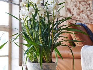Pflanzenfreude.de Interior landscaping Ceramic Multicolored