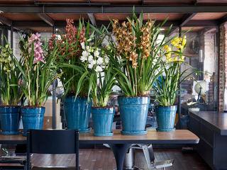 Pflanzenfreude.de Interior landscaping Metal Multicolored