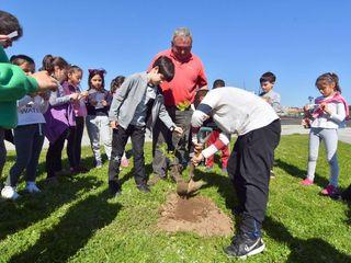 Día del árbol JardinCelas Jardines delanteros Madera Verde