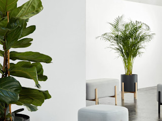 Hobby Flower Interior landscaping Wood Grey