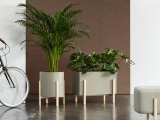 Hobby Flower Office spaces & stores Wood Beige