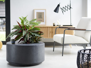 Pflanzenfreude.de Interior landscaping Grey