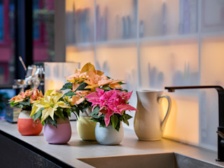 Pflanzenfreude.de Interior landscaping Pottery Multicolored