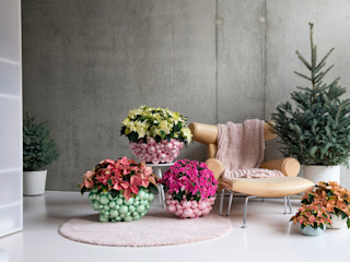 Pflanzenfreude.de Interior landscaping Plastic Multicolored