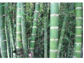 GRENBO Varanda, alpendre e terraçoAcessórios e decoração Bambu Efeito de madeira