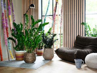 Pflanzenfreude.de Interior landscaping Beige