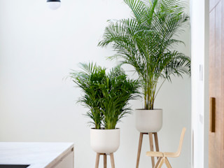 Pflanzenfreude.de Interior landscaping White