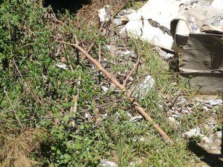 CK Rubble Removal & Tree Felling