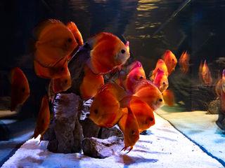 Acquario a parete MELIK LUXURY Aquarium Ingresso, Corridoio & ScaleAccessori & Decorazioni