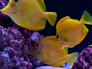Acquario Marino MELIK LUXURY Aquarium Ingresso, Corridoio & ScaleAccessori & Decorazioni