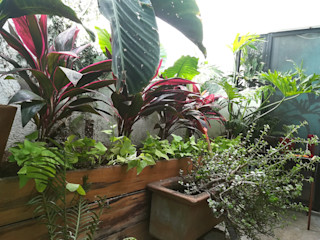 Verde Lavanda СадВазони та вази