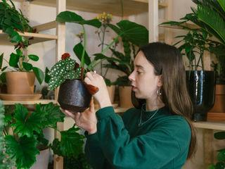 Plant Room Cuemars Ruang Komersial Tropis Green