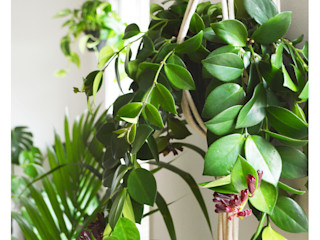 Home office plant decor Cuemars Office spaces & stores