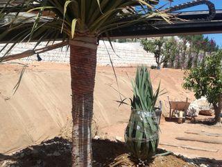 Obra Vista Alegre Paisajismo y Mantenimiento Hibiscus Jardines con piedras