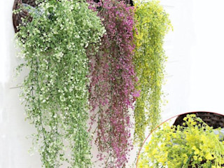 Interior/ Exterior Artificial Hanging Plants Sunwing Industries Ltd Paisagismo de interior Sintético Multicolor
