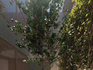 FLORES ROJAS Arquitectura Jardines de estilo moderno