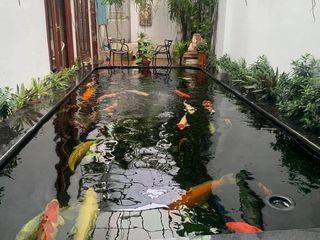Tukang Kolam Minimalis Dan Ikan Koi Surabaya Tukang Taman Surabaya - Tianggadha-art Kolam taman Batu Multicolored