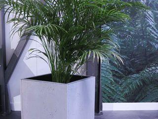 Luxum Paesaggio d'interni Cemento Grigio