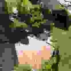 Bambus Kundenterrasse Deutschland Mediterraner Balkon, Veranda & Terrasse von Bamboo4u Mediterran