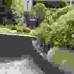 Студия 'ART Story' Garden Plants & flowers