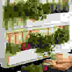 Pop up Pallets Balconies, verandas & terraces Plants & flowers