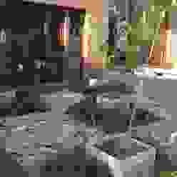 juego de plantas en damero BAIRES GREEN Jardines asiáticos