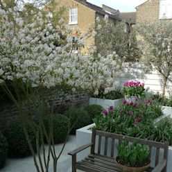 Small urban garden Modern garden by Ruth Willmott Modern