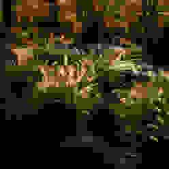 A wild garden in Washington State USA Modern garden by Bowles & Wyer Modern