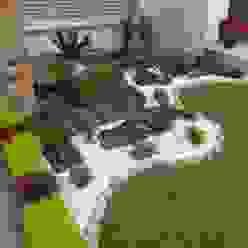 Muestras de trabajo Jardines Paisajismo Y Decoraciones Elyflor Jardines de estilo moderno
