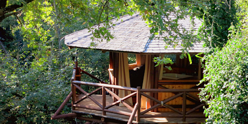 Tree Top Builder Tropikal Evler
