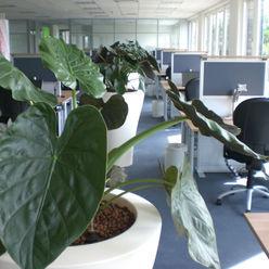 BAUMHAUS GmbH Raumbegrünung Pflanzenpflege Office buildings