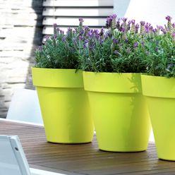 Gartengestaltung Blumenweide GmbH & Co.KG Balkon, Veranda & TerrassePflanzen und Blumen