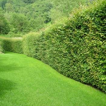 Nuovo giardino con piscina in collina : Giardino in stile in stile Moderno di Studio Green Design