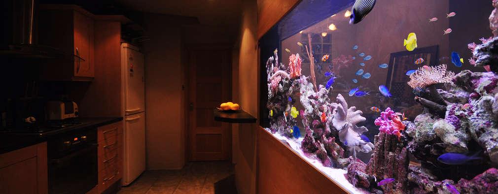 tropical Living room by Aquarium Architecture