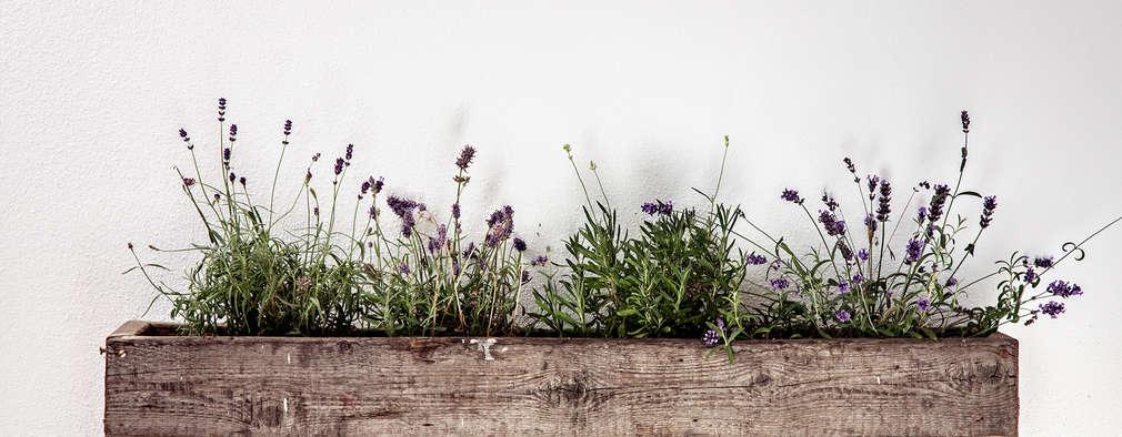 AuBergewohnlich Blumenkasten: Von Edictum   UNIKAT MOBILIAR