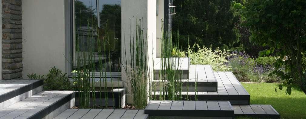 Vue sur le passage 3 plateformes avec equisetum hyemale (prèles): Jardin de style de style Moderne par EURL OLIVIER DUBOIS