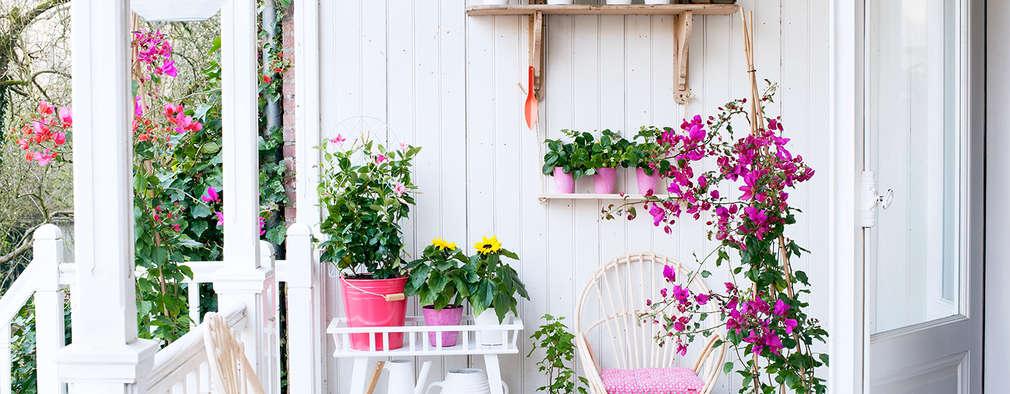 Pflanzenfreude.de:  tarz