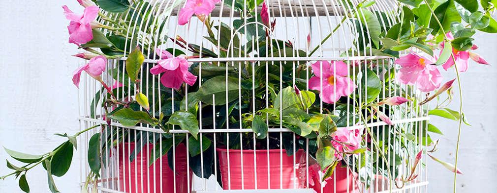 в . Автор – Pflanzenfreude.de