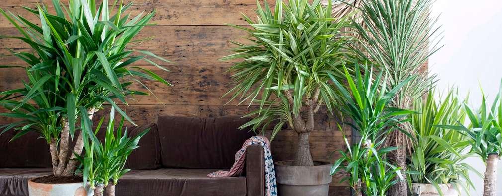 9 plantas perfectas para tu dormitorio - Plantas para dormitorio ...